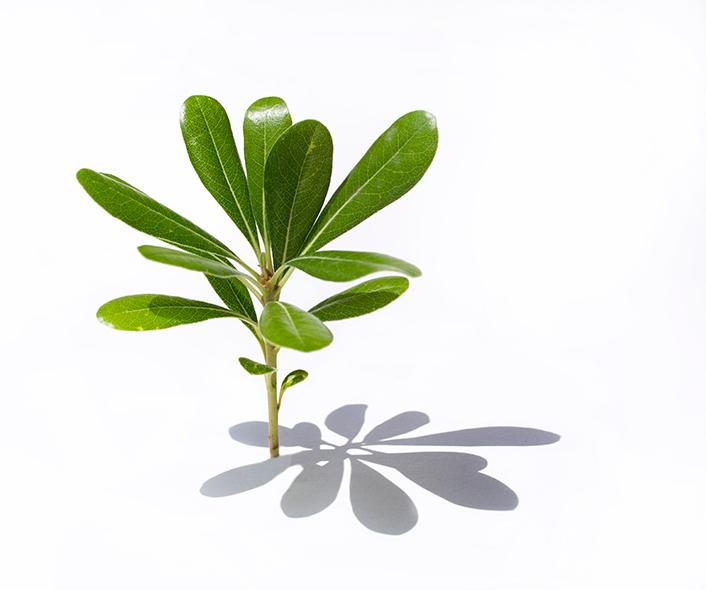 arbolito verde