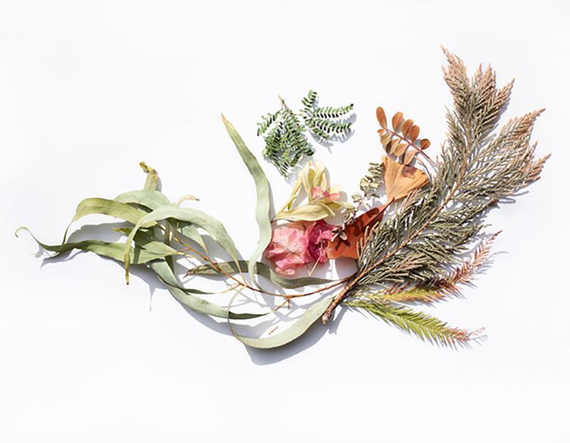 flores y hojas secas