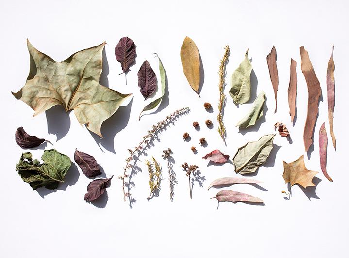 flores y hojas secas formando un rectangulo