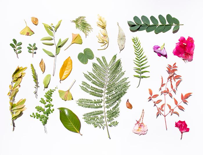 hojas y flores vivas