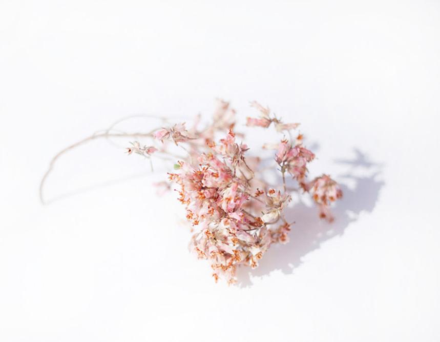 flor de brezo