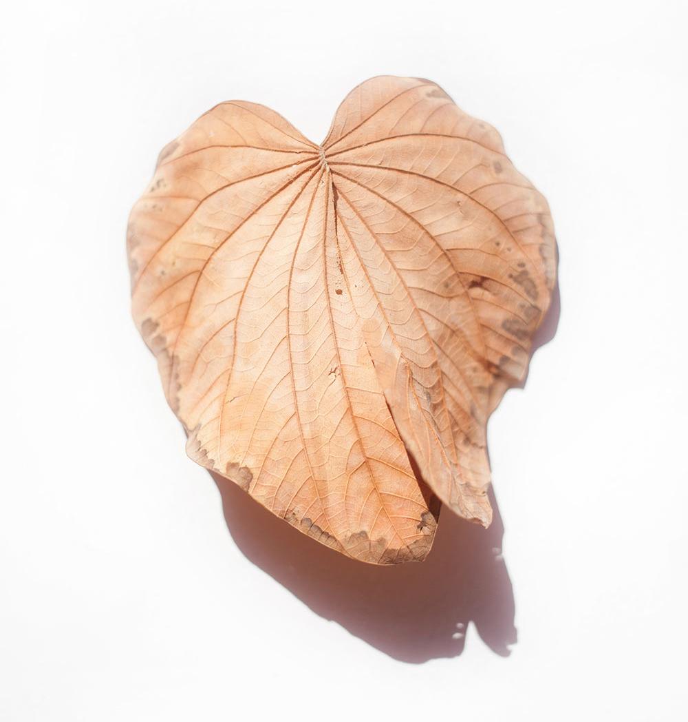 hoja seca color marrón