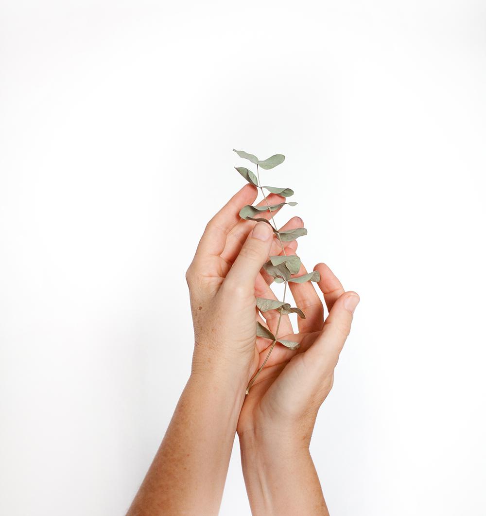 manos con eucalipto