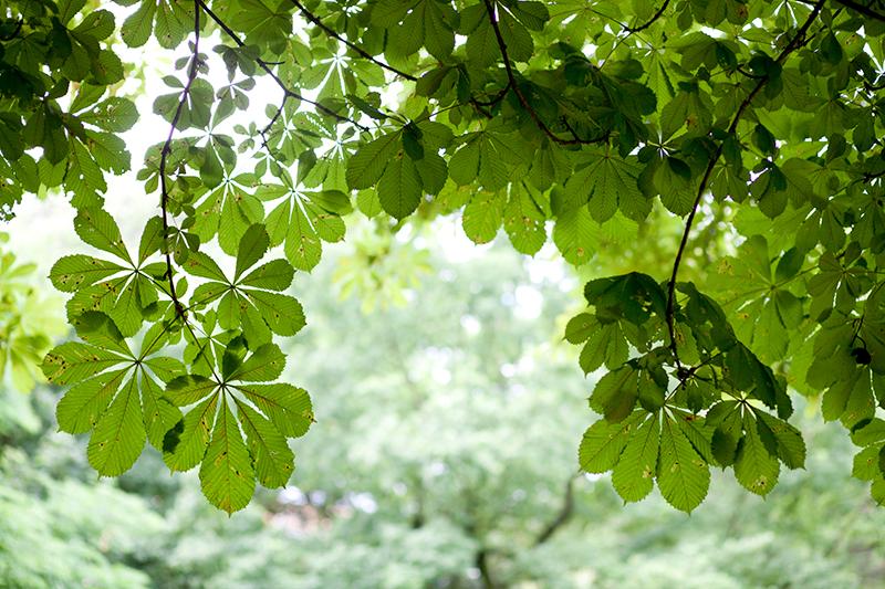 ramas verdes en París