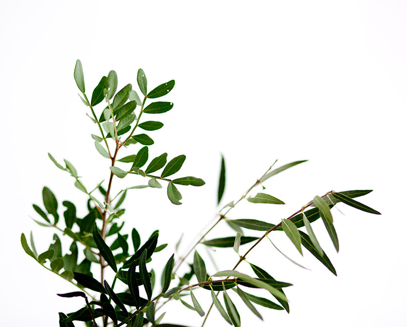 rama verde intenso